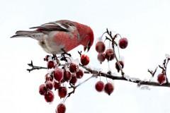 Season's Greetings | Artist: Debbie McKay | Sponsor: Sudbury INO