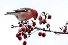 Season's Greeting's | Sponsor: Sudbury INO | Artist: Debbie McKay